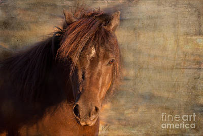 Shetland Pony At Sunset Poster by Michelle Wrighton