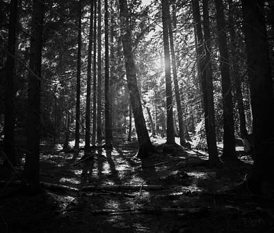 Shining Through Poster by Nicklas Gustafsson