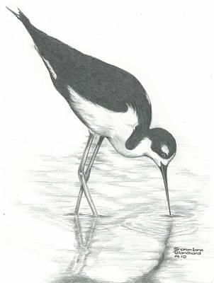 Shore Bird Poster by Sharon Blanchard