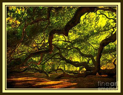Side Limbs Of The 1400 Year Old Angel Oak Poster by Susanne Van Hulst