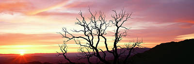 Silhouette Of A Bare Tree At Sunrise Poster by Panoramic Images