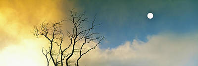 Silhouette Of A Solitary Bare Tree Poster by Panoramic Images
