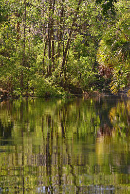 Silver Springs Nature Park Florida Poster by Christine Till
