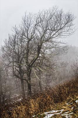 Skeletons In The Fog Poster by Debra and Dave Vanderlaan