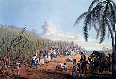 Slaves Cutting The Cane, From Ten Views Poster by William Clark