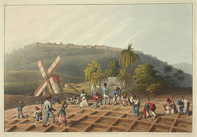 Slaves Working On A Plantation Poster by British Library