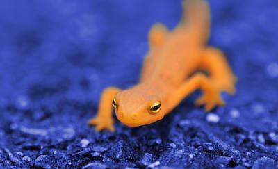 Sly Salamander Poster by Luke Moore