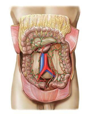 Small Intestine Lymphoid System Poster by Asklepios Medical Atlas