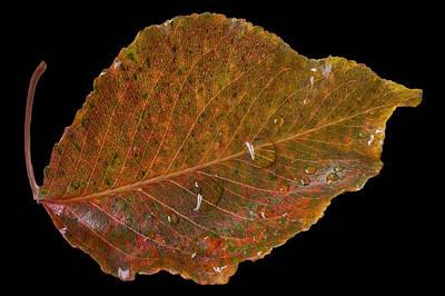 Small Leaf Poster by Mariola Szeliga