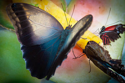 Snack Time For The Butterflies Poster by David Patterson