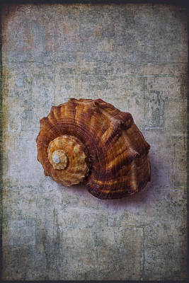 Snail Shell Study Poster by Garry Gay