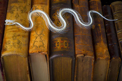 Fangs Poster featuring the photograph Snake And Antique Books by Garry Gay
