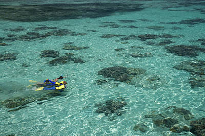 Snorkelers And Reef, Green Island Poster by David Wall