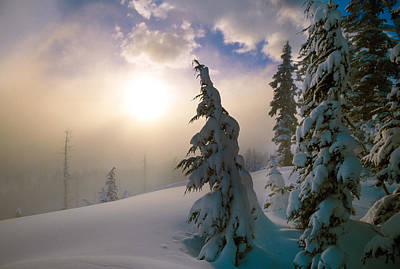 Snow-covered Pine Trees, Sunrise Poster by Panoramic Images