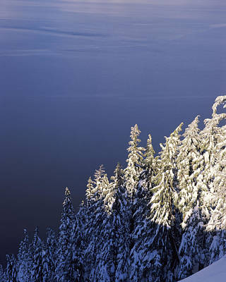 Snow Covered Trees At South Rim, Crater Poster by Panoramic Images