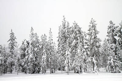 Snow Covered Trees  Poster by Lilach Weiss
