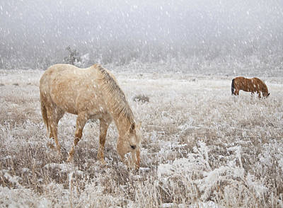 Snow Falling On Horses Poster by Theresa Tahara