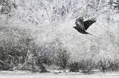 Snow Storm With Crow Poster by Theresa Tahara