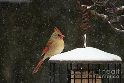 Snowy Cardinal Poster by Benanne Stiens
