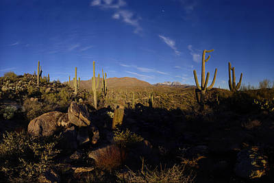Snowy Four Peaks With Saguaro Cactus Poster by Brian Lockett