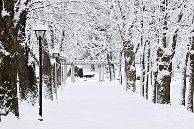 Snowy Lane In Winter Park Poster by Elena Elisseeva