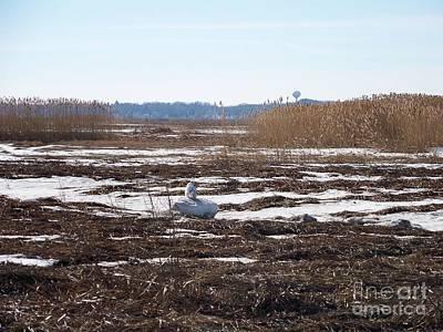 Snowy Owl In Winter Landscape Poster by Eunice Miller