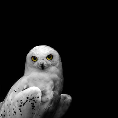 Snowy Owl Poster by Mark Rogan