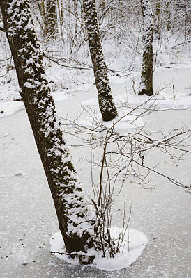 Snowy Trees In Frozen Pond - Winter Forest Poster by Matthias Hauser