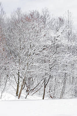 Snowy Trees In Winter Park Poster by Elena Elisseeva