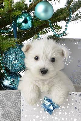 Snowy White Puppy Present Poster by Greg Cuddiford