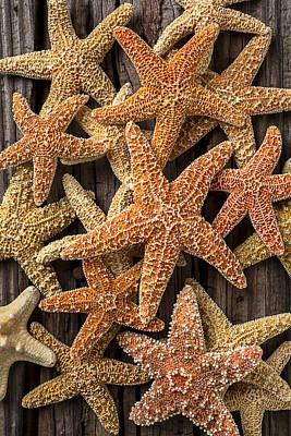 So Many Starfish Poster by Garry Gay