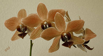 Sofia Orchid Poster by Ben and Raisa Gertsberg