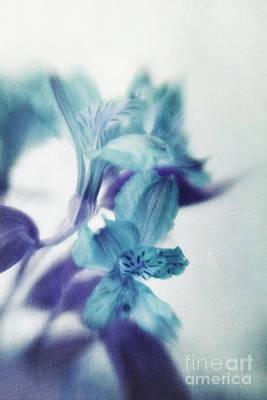 Soft Blues Poster by Priska Wettstein