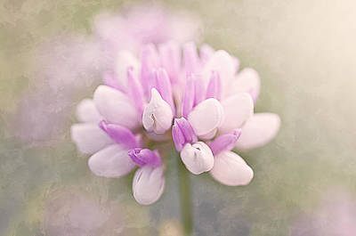 Soft Color Clover Poster by Faith Simbeck