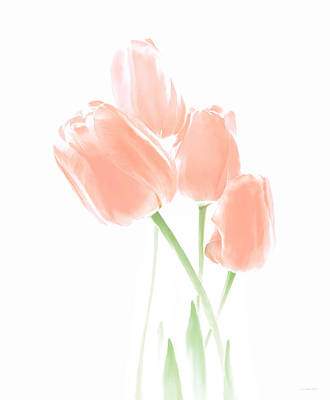 Softness Of Peach Tulip Flowers Poster by Jennie Marie Schell