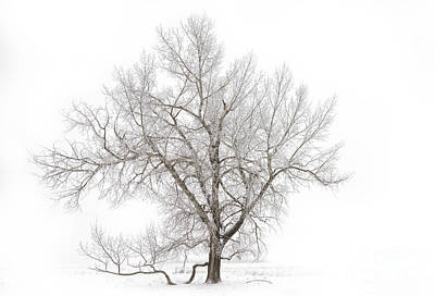 Solitary Tree Poster by Dan Jurak