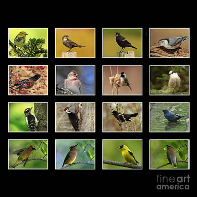 Song Birds Of Canada Collection Poster by Inspired Nature Photography Fine Art Photography