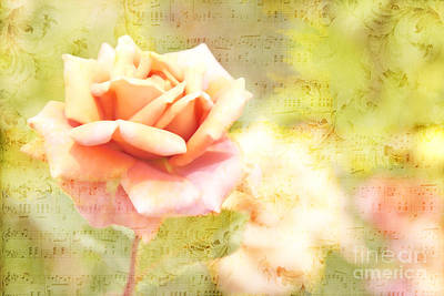 Song Of Spring II - Lovely Pale Orange Rose Poster by Beverly Claire Kaiya