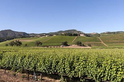 Sonoma County Vineyards Poster by Carol M Highsmith