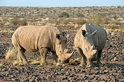 Southern White Rhinoceros Poster by Tony Camacho