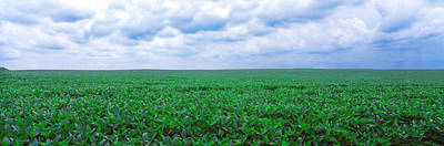 Soybean Field, Coles, Philo, Urbana Poster by Panoramic Images