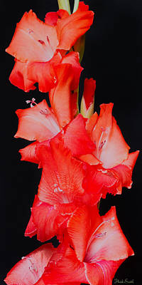 Spanish Dancer Poster by Heidi Smith