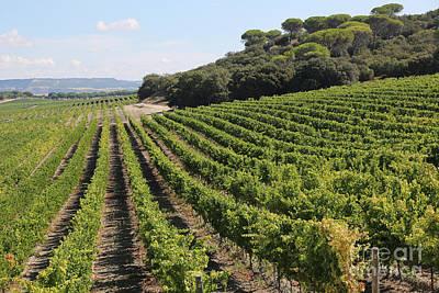 Spanish Vineyard Poster by Carol Groenen