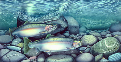 Spawning Steelhead Trout Poster by Jon Q Wright