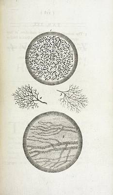 Sperm And Blood Microscopy Poster by British Library