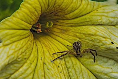Spider On A Liliy Poster by Paul Freidlund