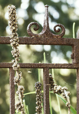 Spider Web On A Wrought Iron Fence Poster by Tracy Winter