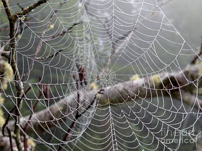 Spider Webs Poster by Val Carosella