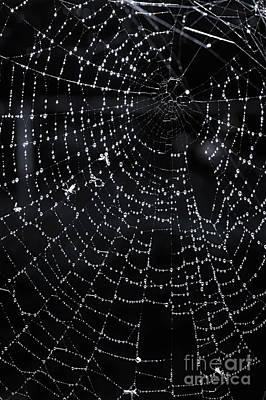 Spiderweb Poster by Elena Elisseeva