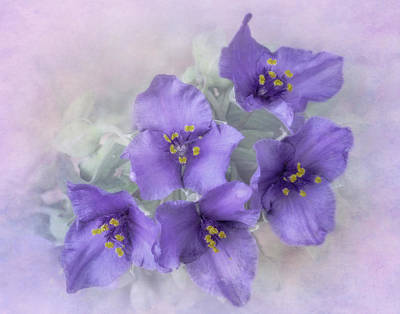 Spiderwort Cluster Poster by David and Carol Kelly